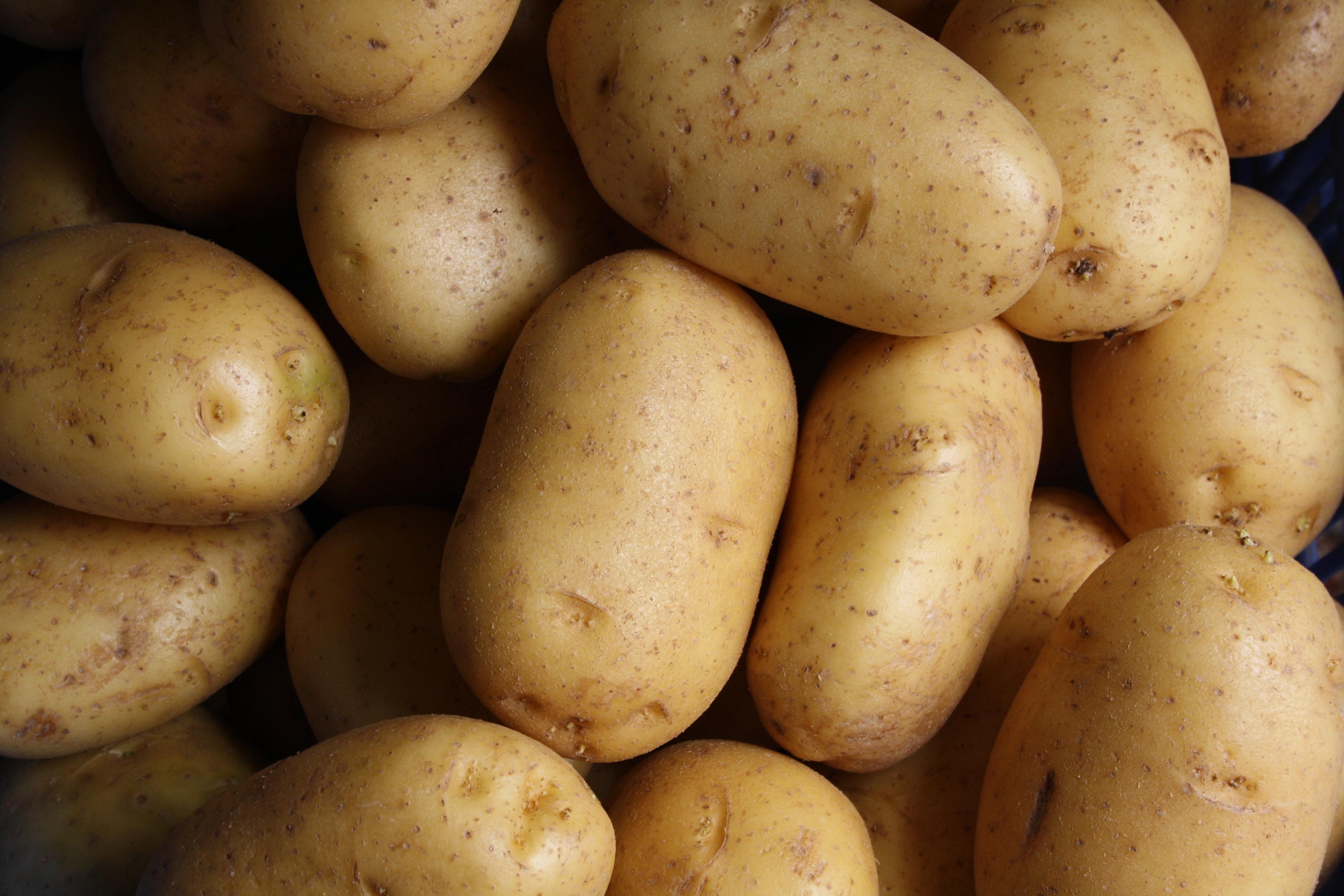 potatis-med-god-hållbarhet